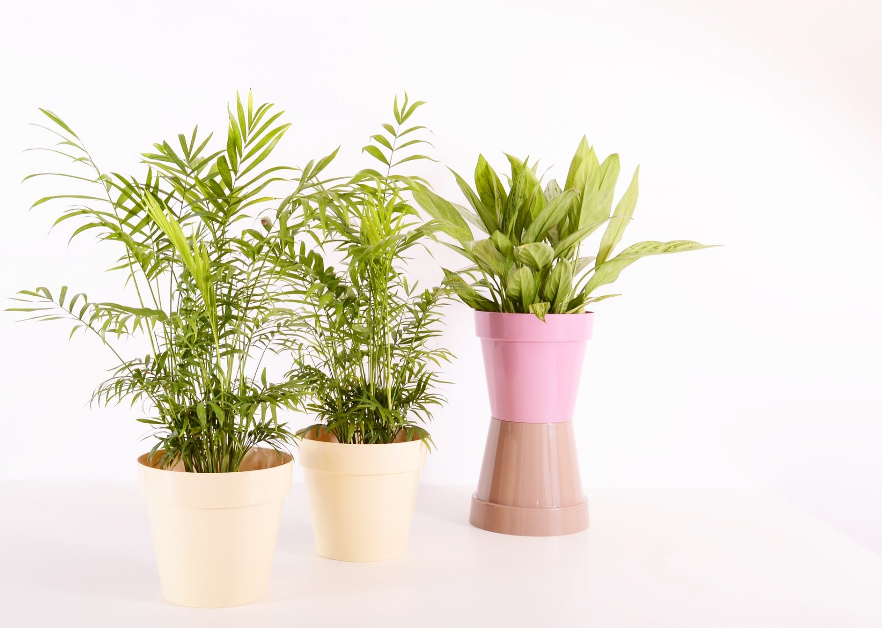 Top 6 indoor plants that release oxygen at night - Roots n ...